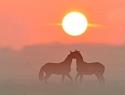 paarden-zon