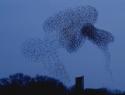 spreeuw-wolk
