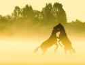 paarden-steiger-mist