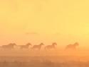 paarden-ren