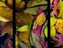 Roeli-van-Til-20191205-Gekleurd-blad