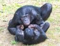 Ina Bouhuijzen Bonobo-5847-2