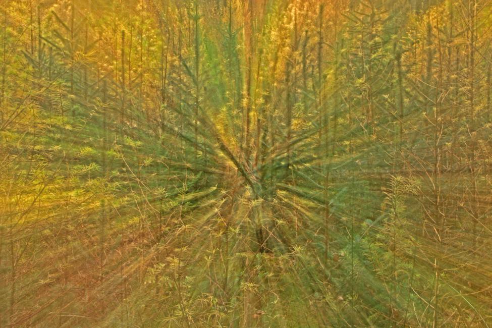 Jan Boer - Herfstkleuren Speulderbos