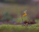 Jan Boer - Eerste herfst voor boompje (ca 15 cm hoog)
