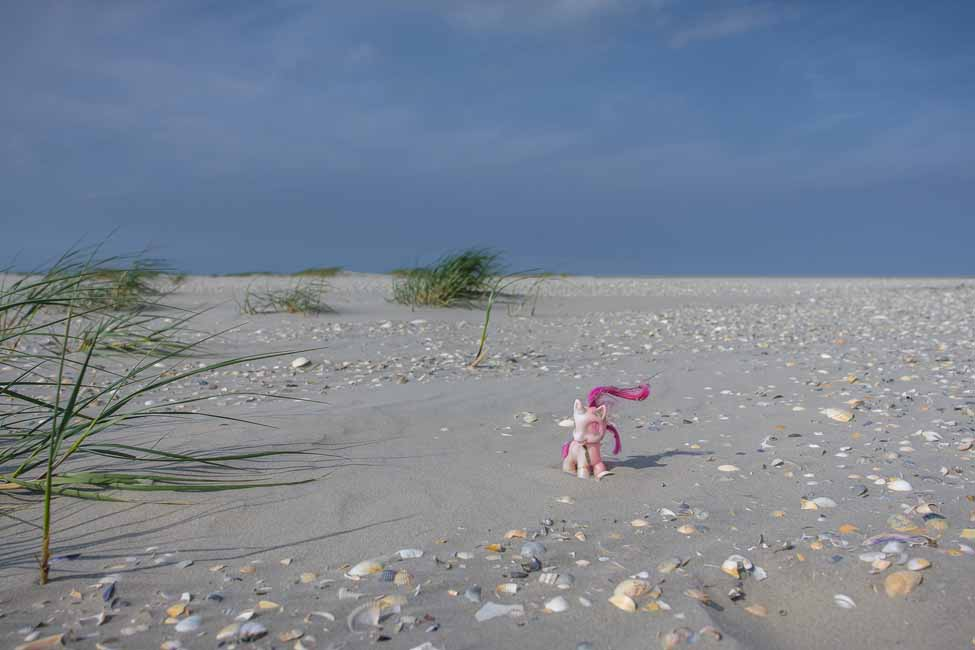 Douwe-Rif_my-little-pony-uit-een-container-1