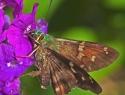 Cost Rica vlinder