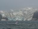 blauwe vinvis Spitsbergen