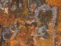 Lubbert Erosie