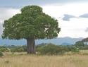 CRI007 Tanzania.jpg