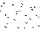 Rob Blanken - Spreeuwen