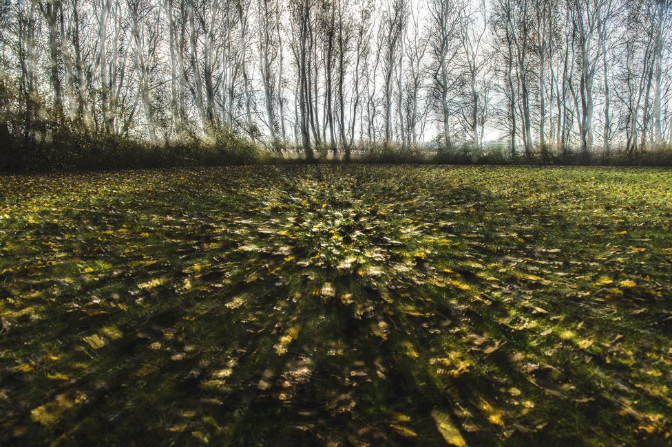 Douwe Struiksma - De bomen en de bladeren