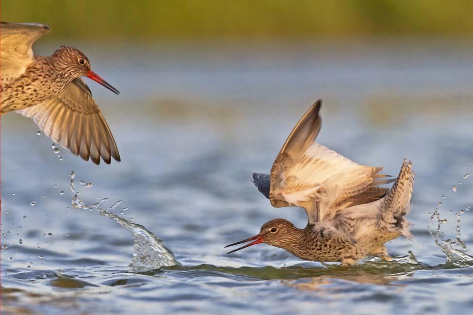 Jan Boer - Vogelgevecht