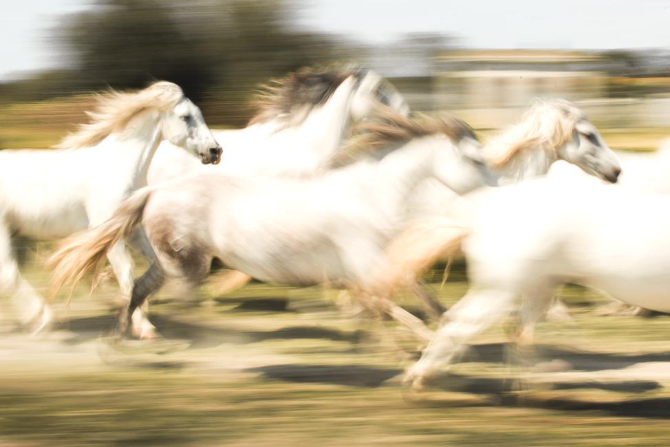 Hans Schinkel - Paarden