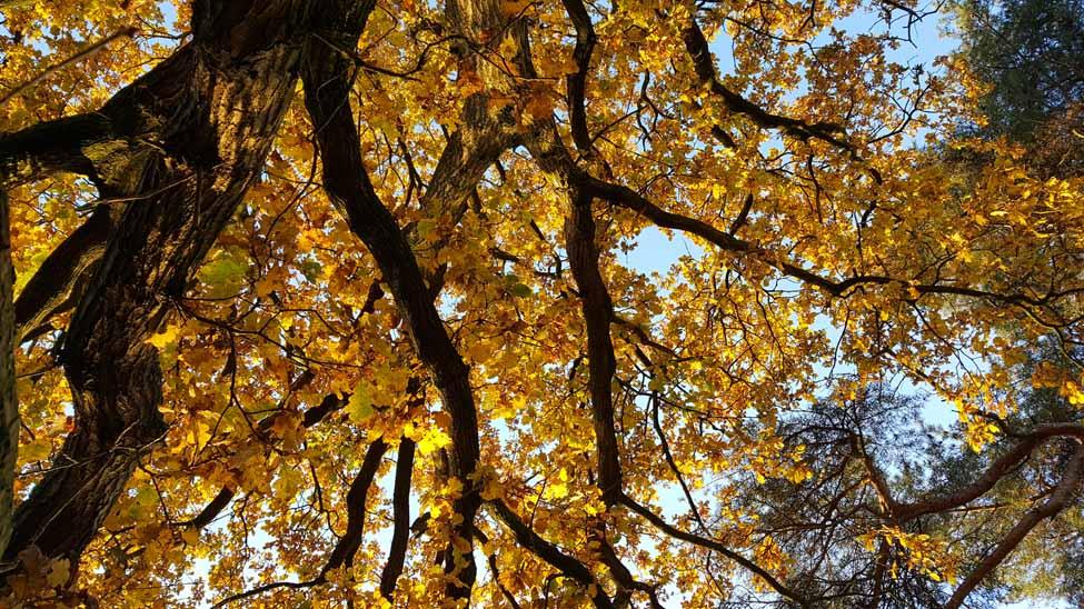 Herfst 4, Hans de Waard (1 van 1)