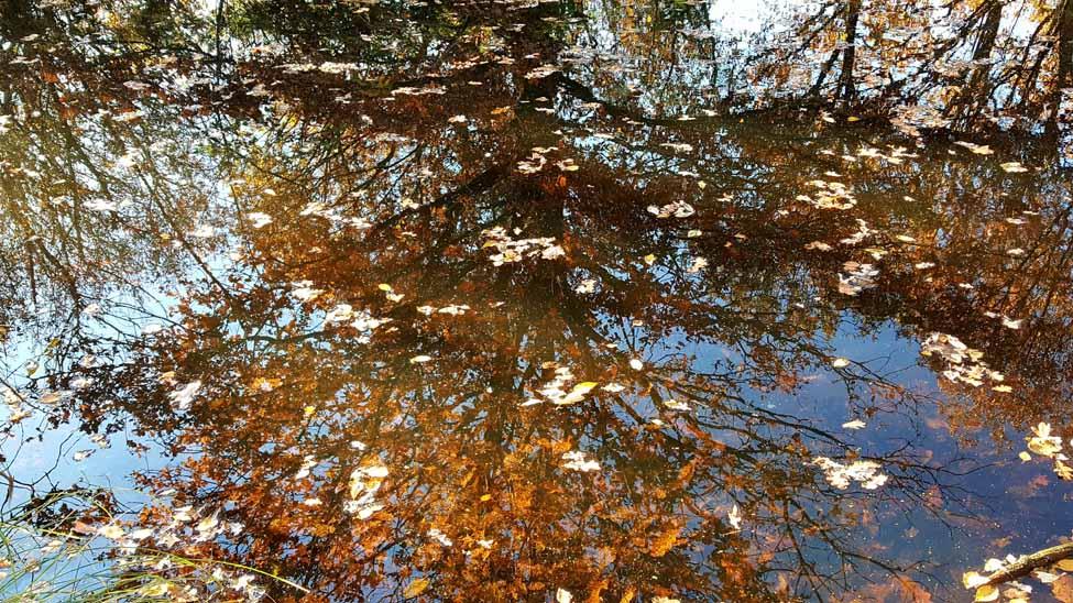 Herfst 5, Hans de Waard (1 van 1)