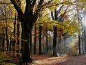 DTH002 herfst