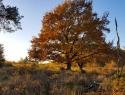 Herfst 3, Hans de Waard (1 van 1)