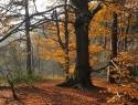 Herfst 6, Hans de Waard (1 van 1)
