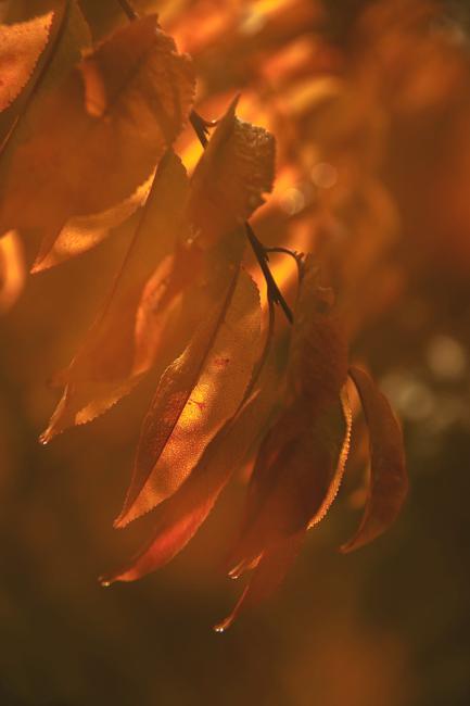 voor thema 'herfst' 2