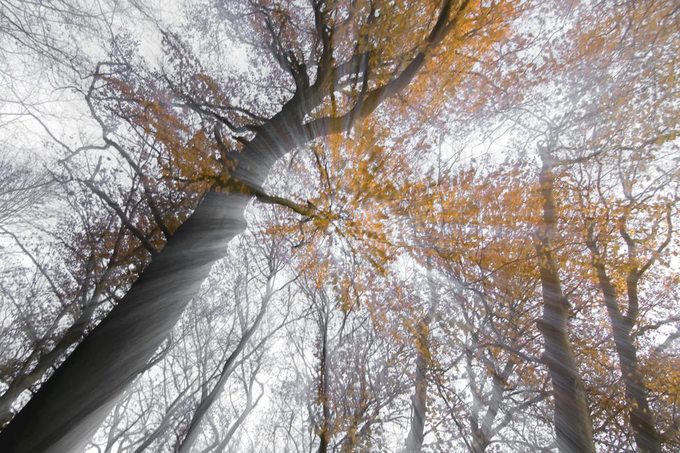 voor thema 'herfst' 3