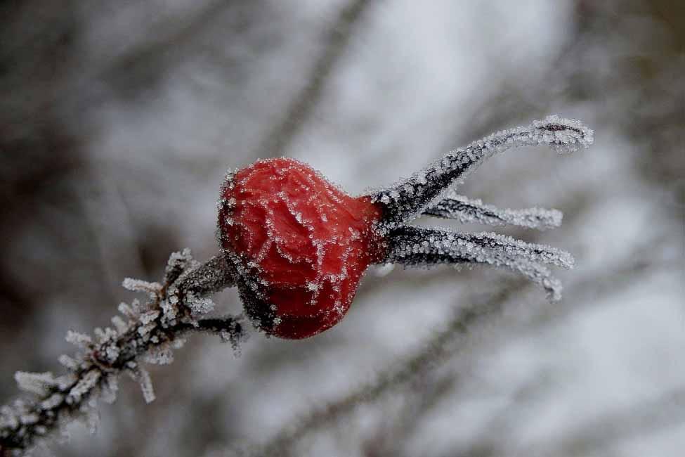 Jaap Veenstra Winter VAJ002