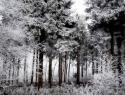 Jaap Veenstra Winter VAJ001