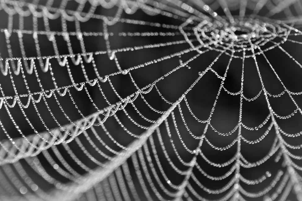 Gerda de Vries Spinnenweb