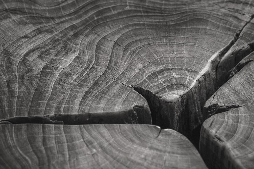 Cor Pot Versteend hout (1 van 9)