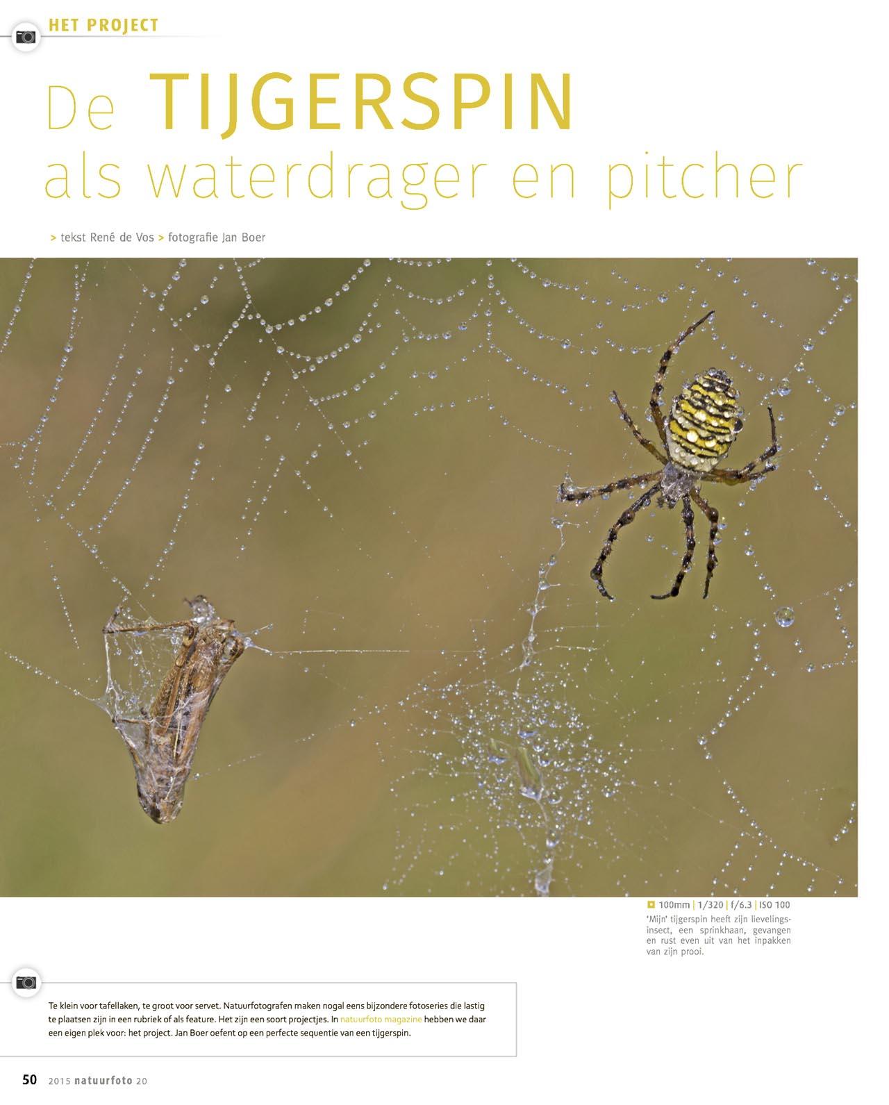 NFM 20 Tijgerspin web3