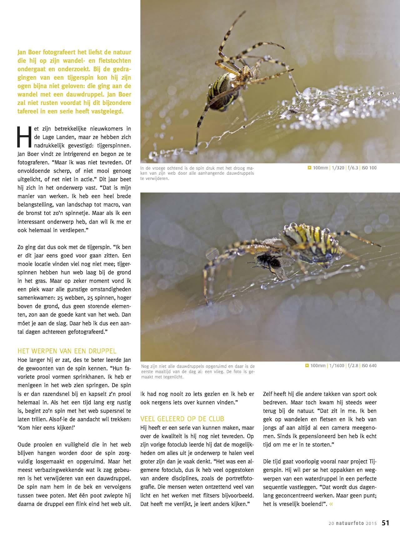 NFM 20 Tijgerspinweb4