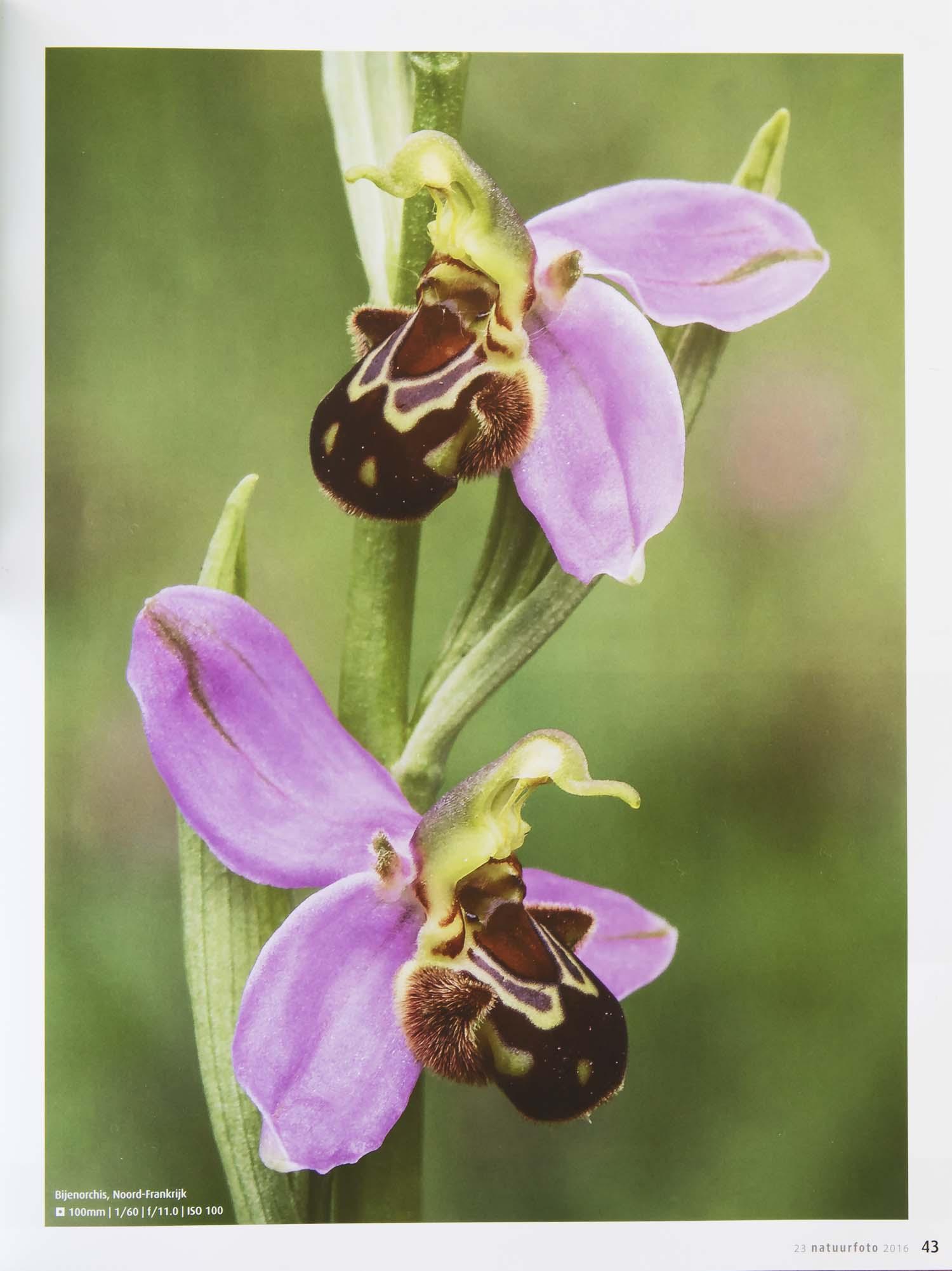 Orchideeen Leo Vogelenzang 2