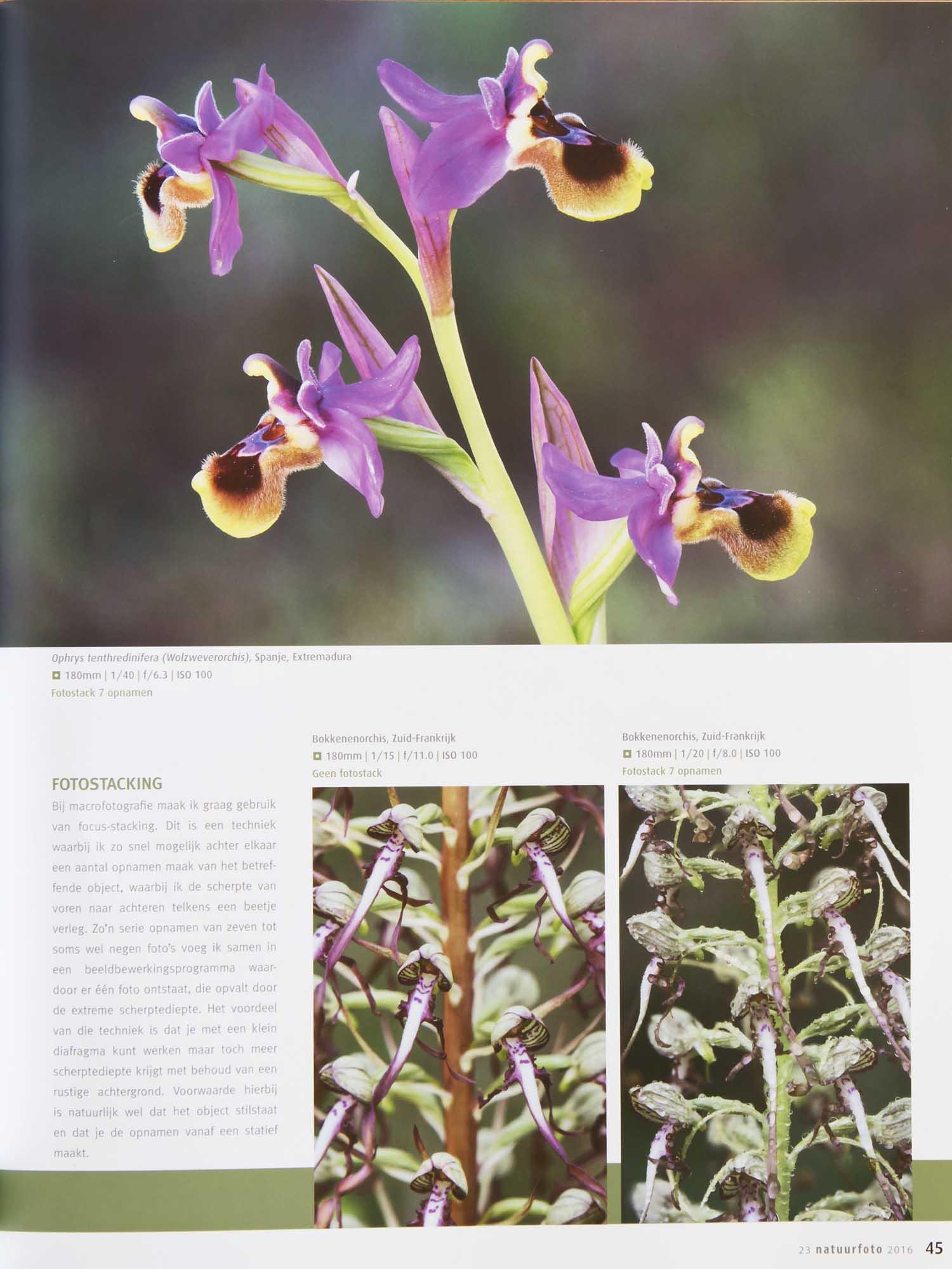 Orchideeen Leo Vogelenzang 4