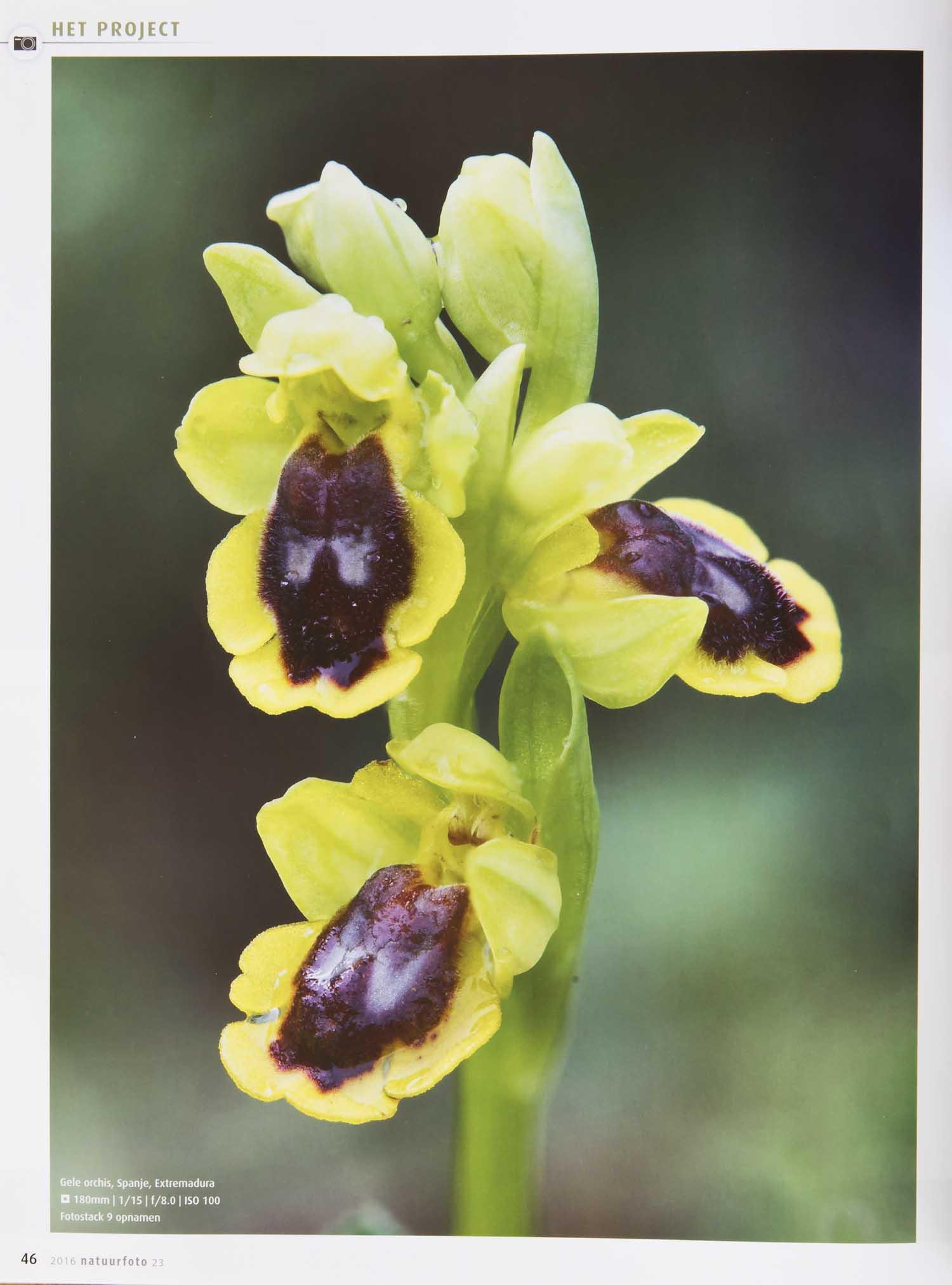 Orchideeen Leo Vogelenzang 5